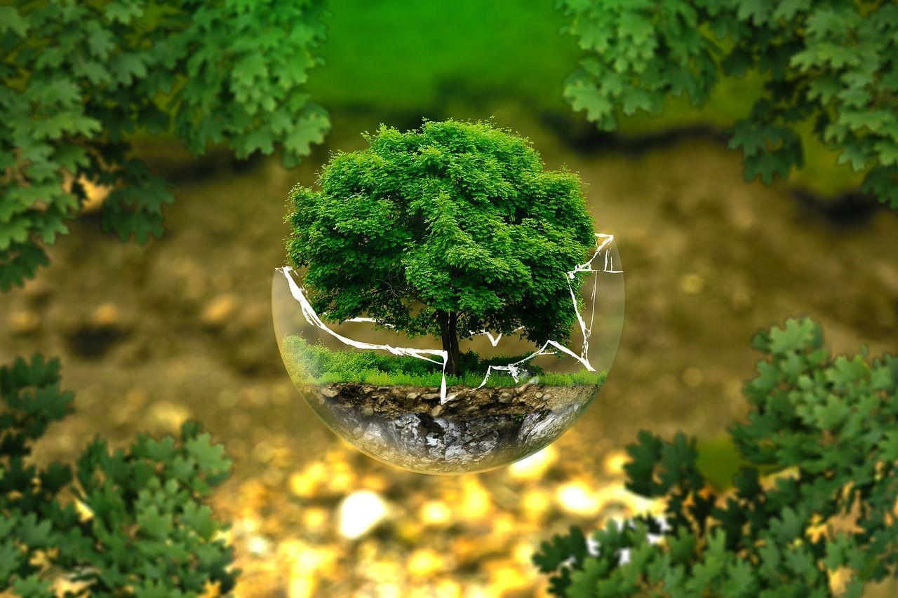 productos ecologicos biodegradables