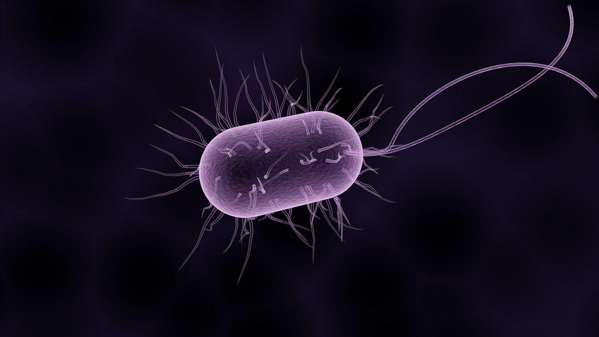 donde hay mas bacterias