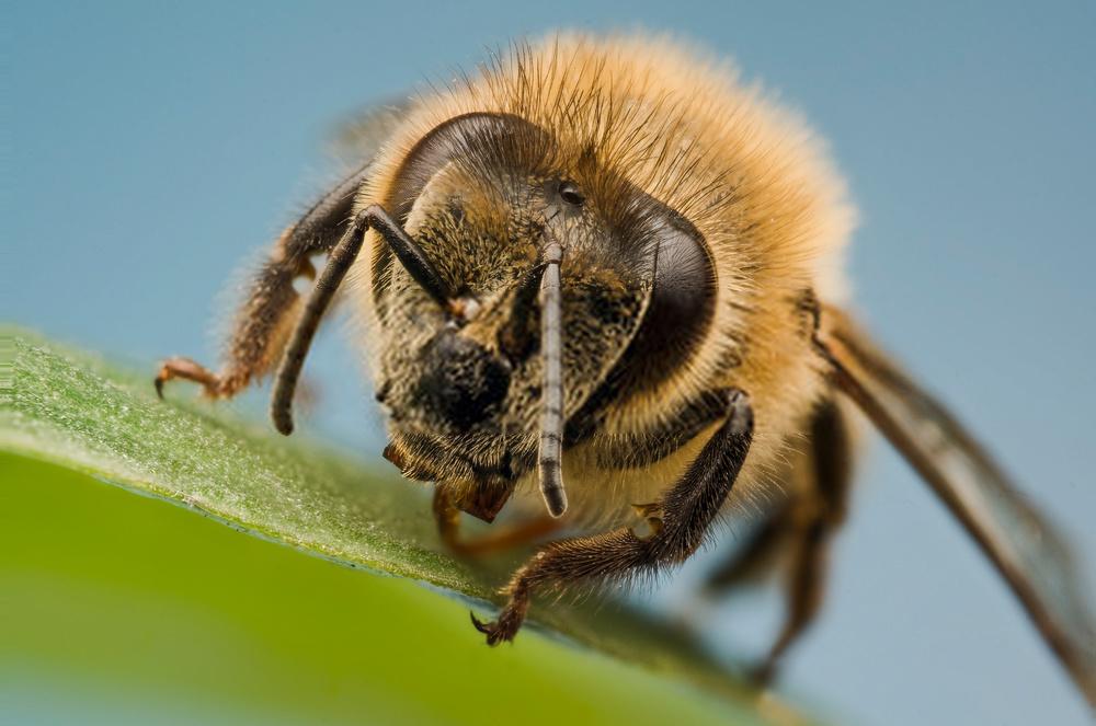 abejas verano