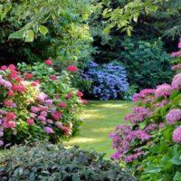 ¿Cómo limpiar y cuidar tu jardín?