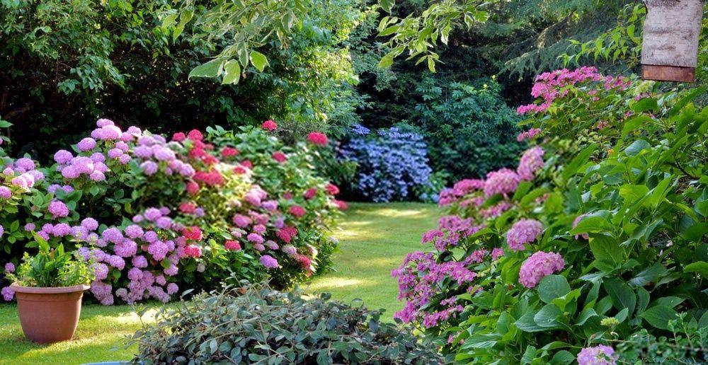 cuidar jardin