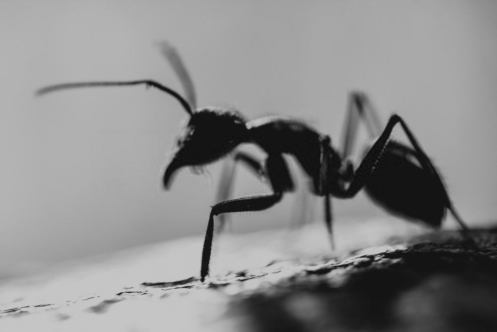 hormigas verano