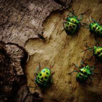 ¿Por qué los bichos parecen más comunes durante el verano?