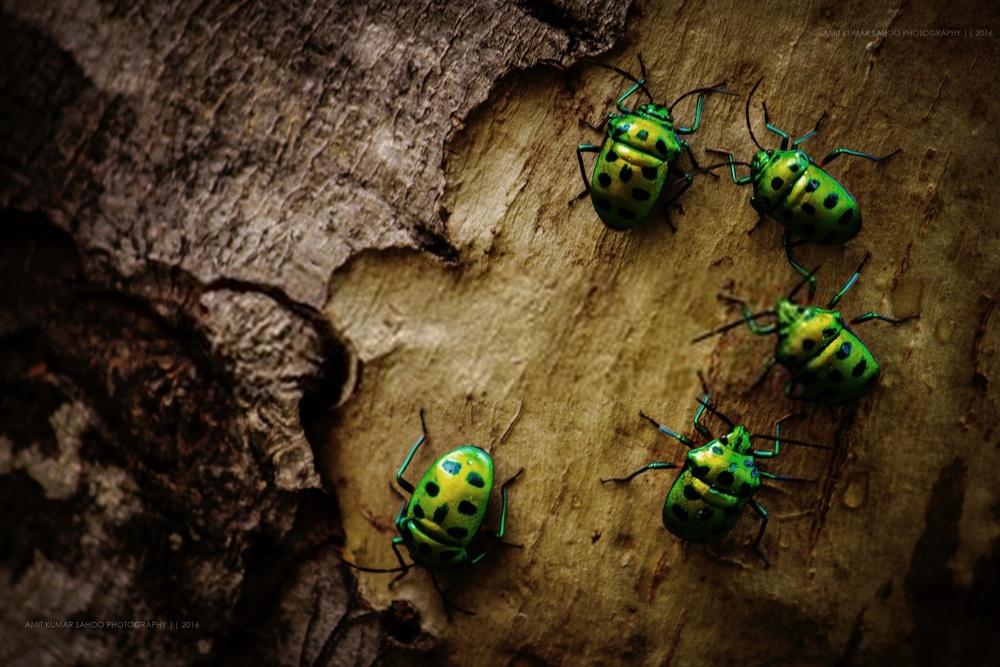 insectos en verano