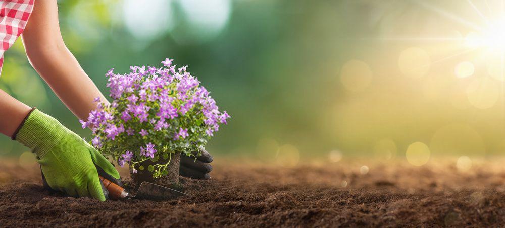 plantar plantas en jardin