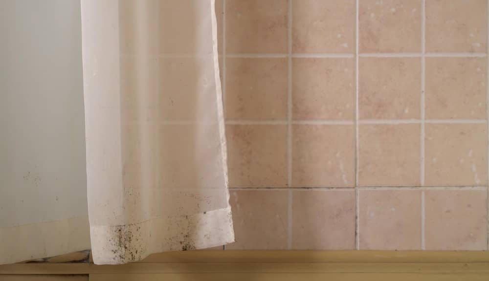 elimiar moho cortinas ducha